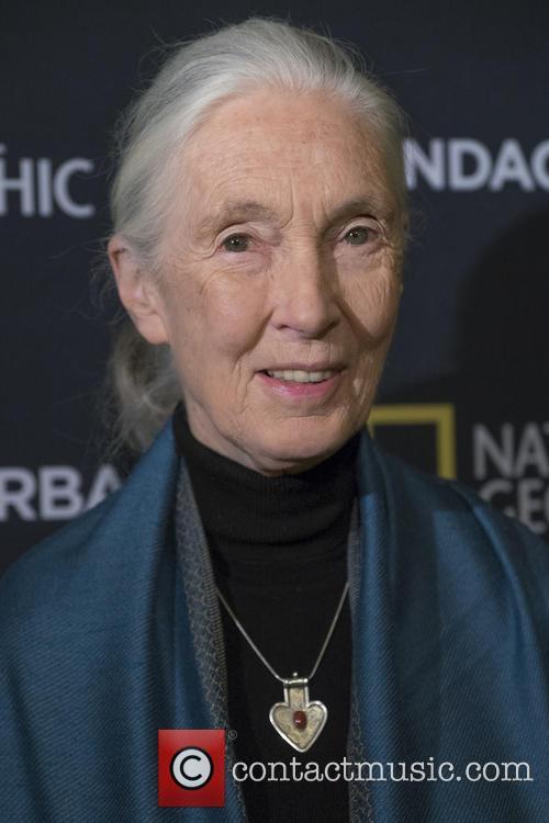 Jane Goodall 4