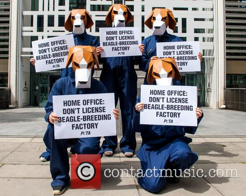 Peta UK protest against experimentation on beagles.