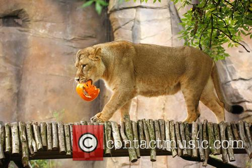 Halloween and London Zoo 2