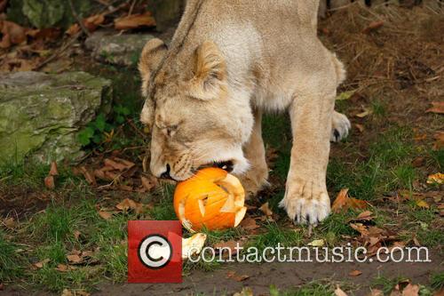 Halloween and London Zoo 3