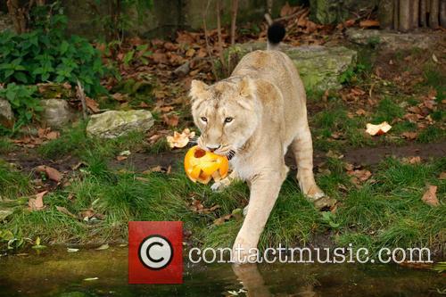 Halloween and London Zoo 4