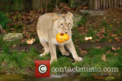 Halloween and London Zoo 5