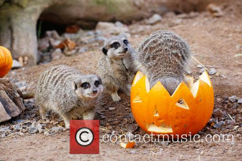 Halloween and London Zoo 6