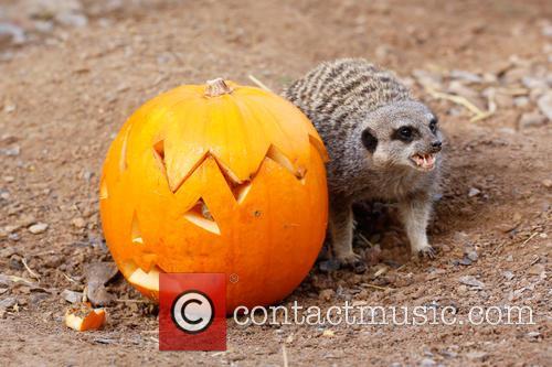 Halloween and London Zoo 7