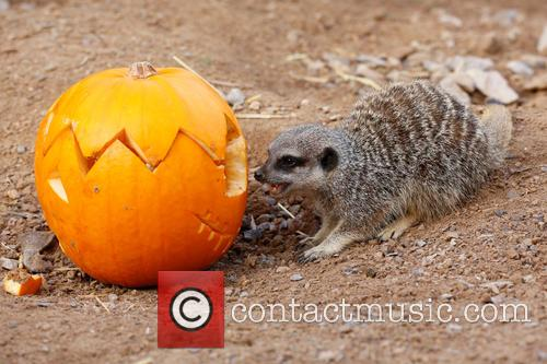 Halloween and London Zoo 8