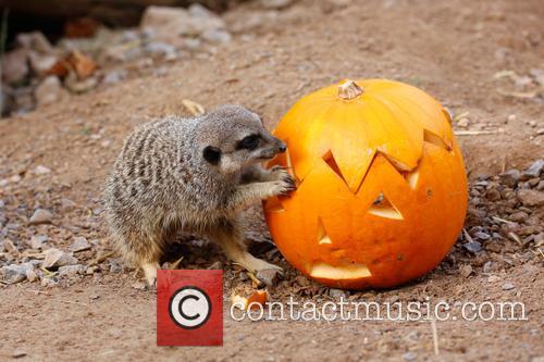 Halloween and London Zoo 9