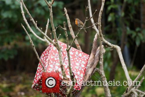 Garden Robin 1