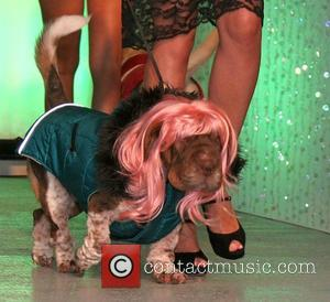 Runway Dogs Runway show for Pet Fashion Week New York. Pet Fashion Week is a tradeshow and a designer platform...