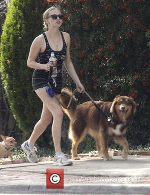 Amanda Seyfried out jogging with her Aussie Shepherd dog, Finn in West Hollywood Los Angeles, California - 19.10.11