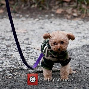 Blake Lively's Dog Penny  'Gossip Girl' filming in the Upper West Side of Manhattan  New York City, USA...