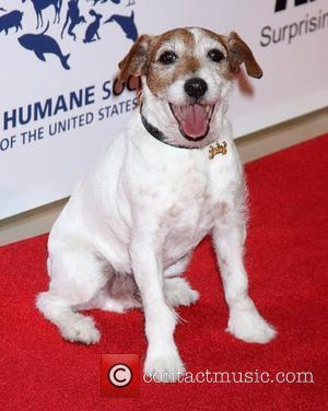 Uggie, Angela Kinsey and Beverly Hilton Hotel