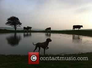 Place Runner Up, Dogs, Work, Photo and Jon Oakey