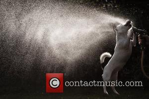 Place Runner Up, Dogs, Play, Photo and Ben Burfitt
