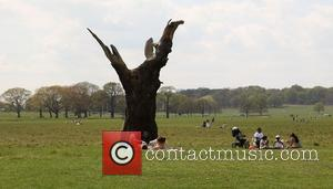 People In Richmond Park and Atmosphere
