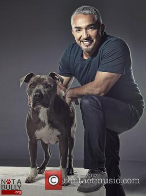 Cesar Millan and Pet Pit Bull Junior