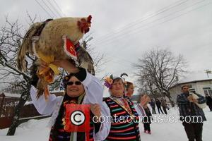 Rooster and Celebration