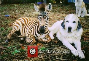 Barcode the Zebra - Twenty years ago Janice Wolf fulfilled her ambition of creating a rescue centre for all animals....