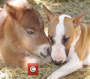 Butterbean the Bull Terrier - Twenty years ago Janice Wolf fulfilled her ambition of creating a rescue centre for all...