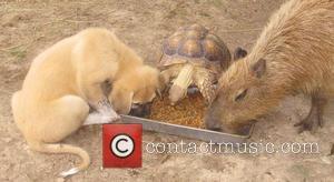 Tortoise, Cheesecake the Capybara and Rocky