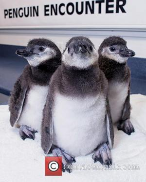 World's First Test Tube and Penguin