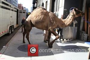 David Letterman and Camel