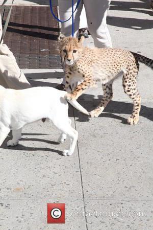 David Letterman, Labrador and Leopard