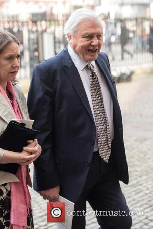 Sir David Attenborough - Richard Attenborough memorial service held at Westminster Abbey - Arrivals. - London, United Kingdom - Tuesday...
