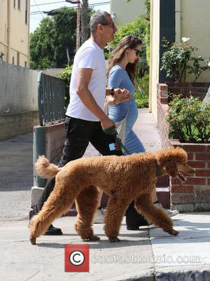Jeff Goldblum and Emilie Livingston - Jeff Goldblum and pregnant wife Emilie Livingston walking their pet dog in West Hollywood...