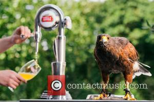 Rufus the Hawk - For more information about the wide range of Stella Artois' celebration of Wimbledon and 'The Perfection...