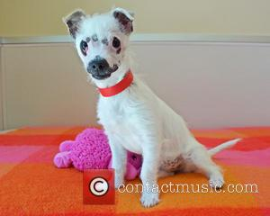 Lucky Dog With The, Scars Gets New Name and New Home