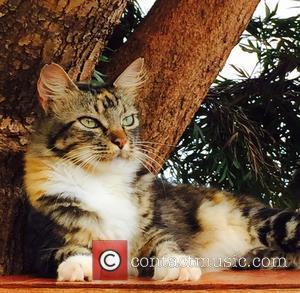 Cat Sanctuary and Hawaiian Island