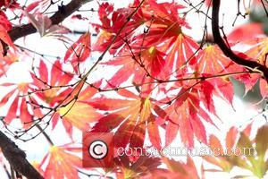 Atmosphere - Trees and leaves give autumn colour at Batsford Arboretum in the Cotswolds. at Batsford - Moreton In The...