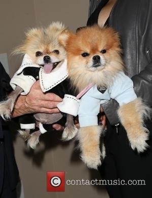 Giggy and Prince Harry