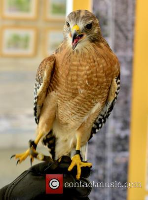 Atmosphere - Books and Books present a Birds of Prey show in conjunction with Frost Science at Coral Gables Museum...