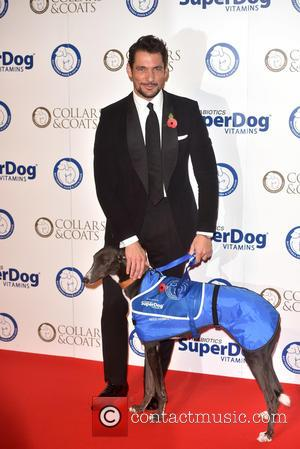 David Gandy at Battersea Dogs & Cats Home's Collars & Coats Gala Ball held at the Battersea Evolution, London, United...