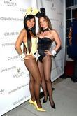 Playboy Bunnies The Celebrity Vault host the only...