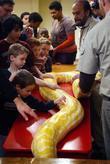 Michael Shwedick allows children stroke an Albino Anaconda