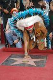David Hodo, Village People, Star On The Hollywood Walk Of Fame, Walk Of Fame