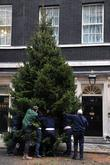 A Christmas Tree Being Erected At Downing Street