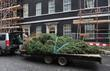 A huge Christmas tree is delivered to Downing Street