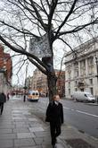 Two Protesters Climb A Tree At Whitehall With Banners In Protest Against The Violence In Gaza