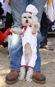 Dog Dressed As A Chef