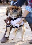 Dog Dressed As A Rod - Yankees