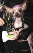 Fanny the dog