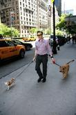Alan Cumming walks his dogs in Manhattan New...