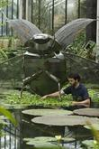 Kew staff tends to water lillies while a...