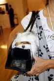 Pet Fashion Week