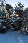 Snow Scene From Roundwood