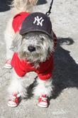 Yankees dog The 21st Annual Tompkins Square Halloween...