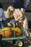 Joanna Krupa and her pet Yorkshire terrier at...